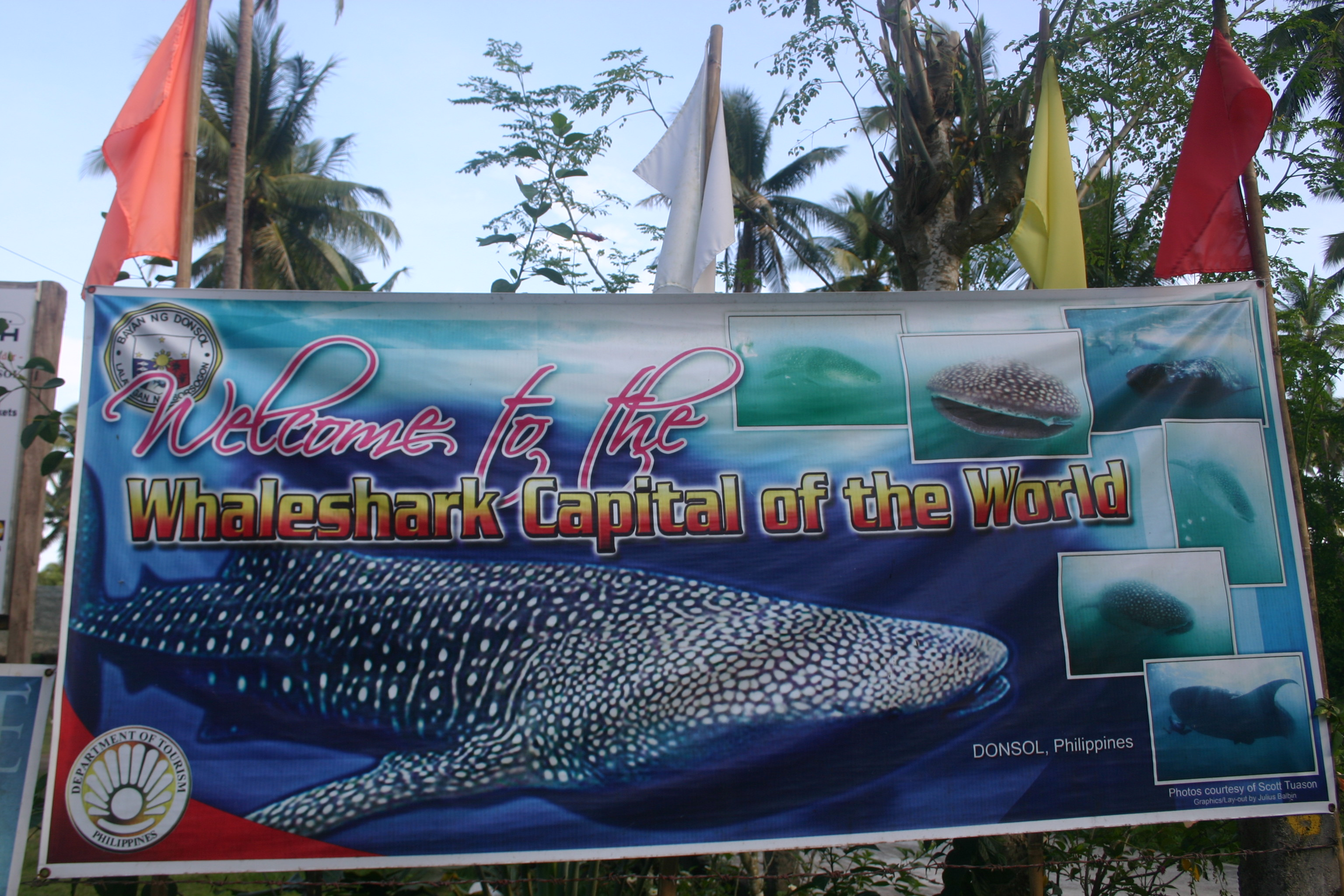 Donsol, the whale shark capital of the world